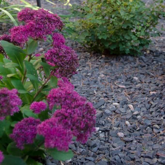 purple-quartizite-2