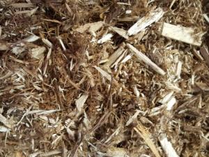 Northern White Cedar, Cedar Mulch, White Cedar, NW Cedar